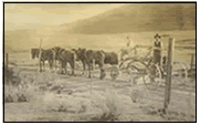 James Blackmore grades a road from Dominagoni Valley to Winchester (eventually to become HWY 79) with his horse-drawn grader - circa 1928